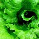Bright green lettuce leaves swirl with nutrition